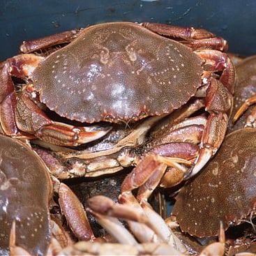 How to Choose Live Crab