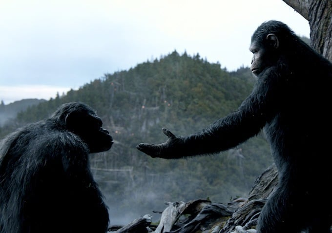 The apes have been given room to rise up after a virus wipes out most of the human population.