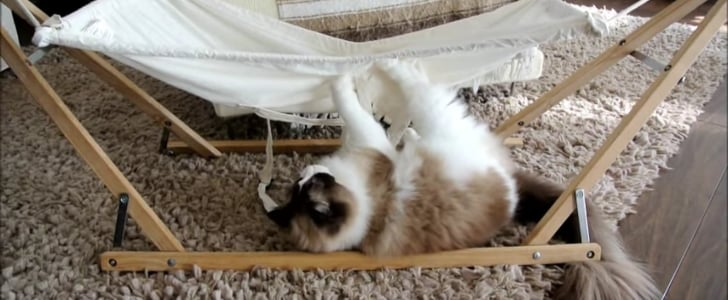 Hammocks Are Just Really, Really Tricky For This Determined Cat
