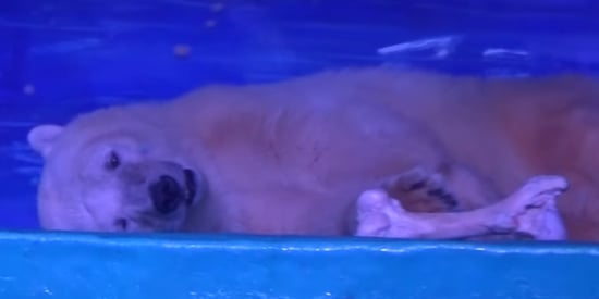 Take A Look Inside Grandview Aquarium, The 'World's Saddest Zoo'