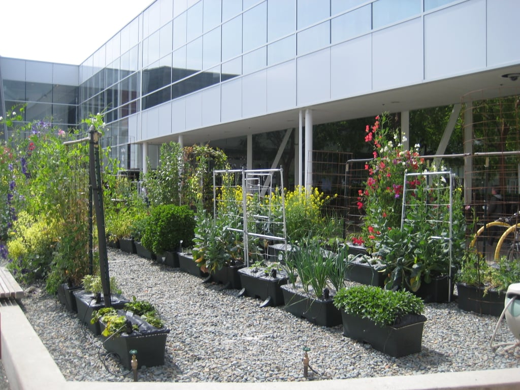 Although they get the majority of their produce from local farms, Google has a small onsite garden. On Thursdays the fresh fruit, vegetables, flowers, and herbs are sold in a farmers market.