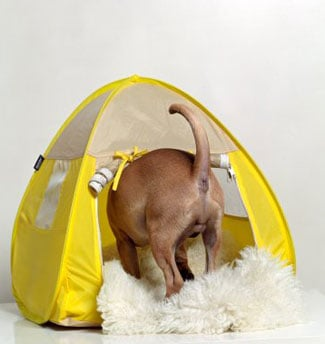 No Wonder They Call It a Pup Tent: Tents For Dogs
