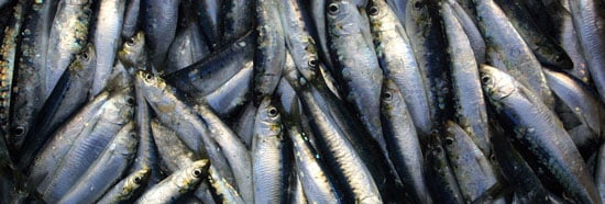 Little Fish Offers Big Doses of Vitamin D