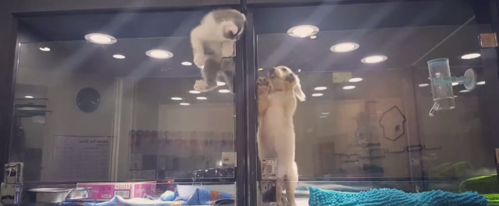 This Is What It Looks Like When a Kitty Just Wants to Play With His Puppy Friend