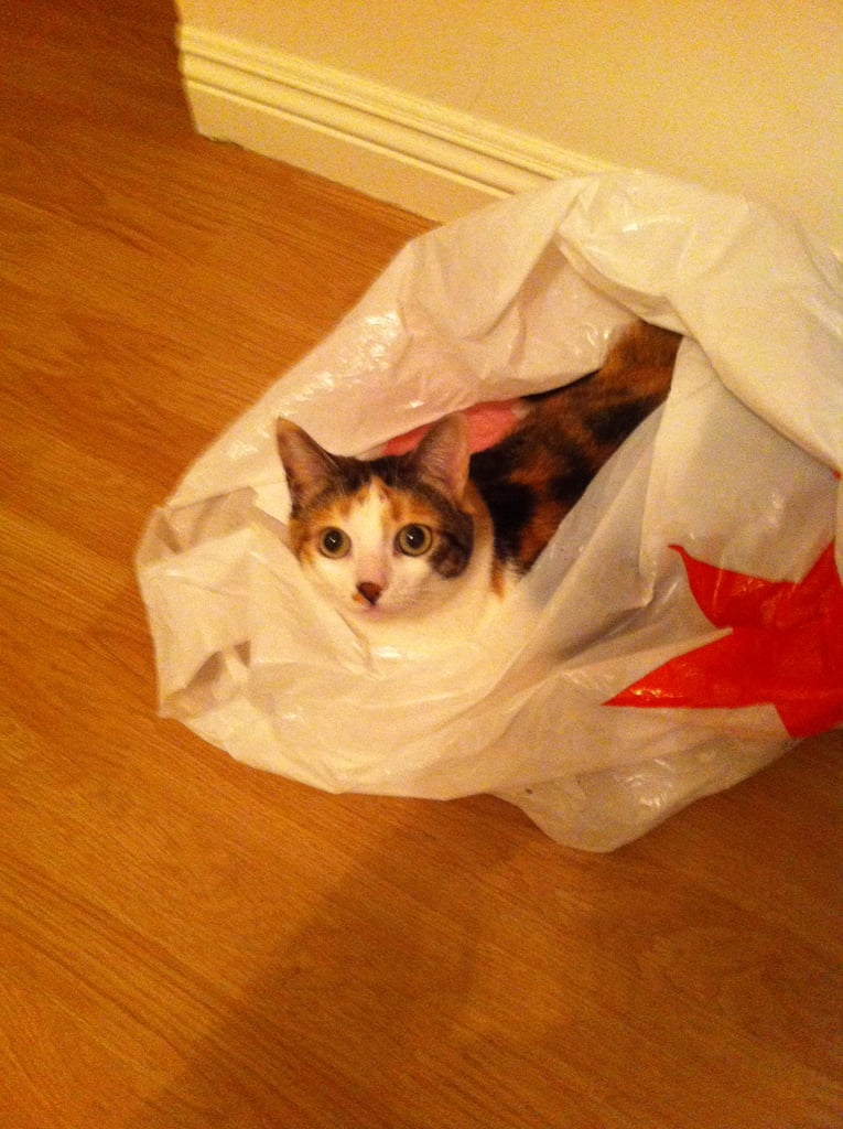 Associate Producer Emily Schafer's cat is aptly named Kitty and likes to sleep in shopping bags.