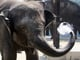 An elephant in Tokyo kept himself cool during hot weather.