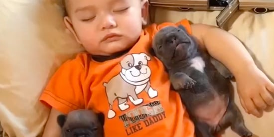 This Napping Toddler And His Puppies Are What Dreams Are Made Of