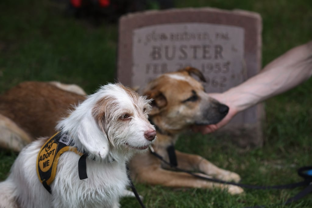 Two rescue dogs paid their respects at the memorial service.
