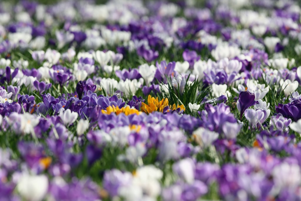London's Battersea Park was filled with flowers.