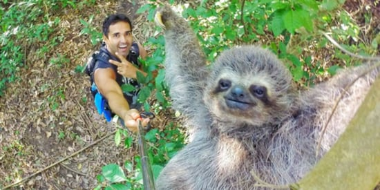 Embrace Life! This Sloth Selfie Is All You Need To Be Happy