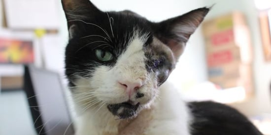'Zombie Cat' Owner Goes To Court In Attempt To Get Pet Back