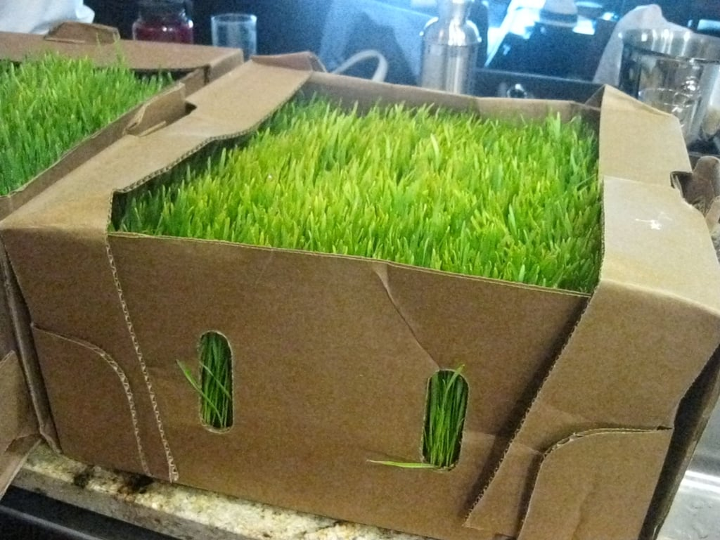 Wheatgrass was part of the assembly.
