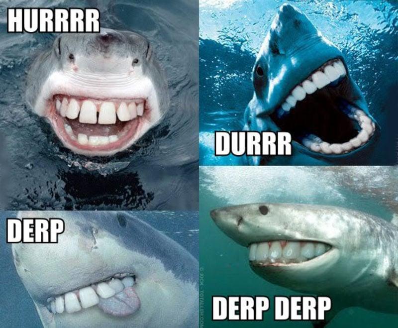 Derpiest Sharks