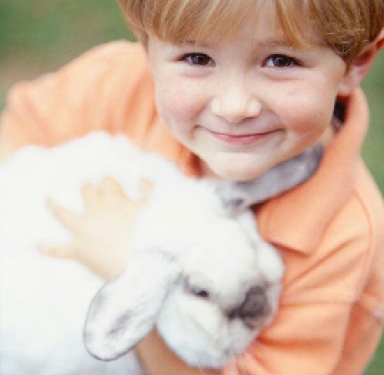 Ever Had a Pet Rabbit?