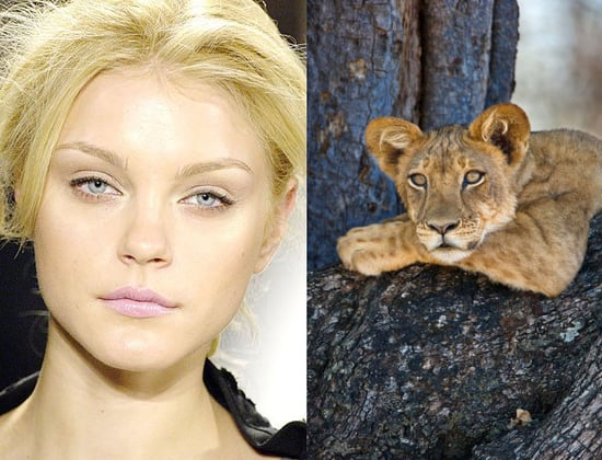 Models That Look Like . . . Animals?