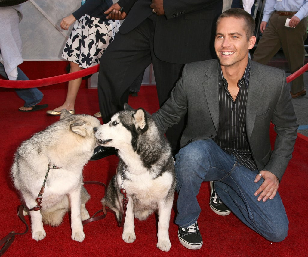 At the LA premiere of Eight Below in February 2006, Paul posed with snow dogs on the red carpet.