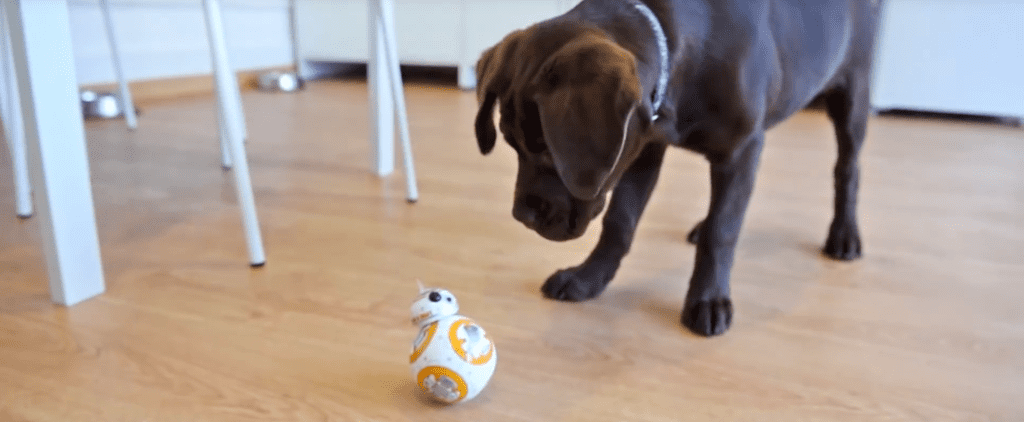 A Puzzled Puppy Meets BB-8 For the First Time and Makes Your Dreams Come True