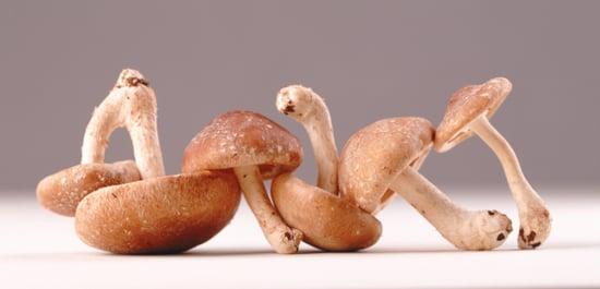 What's Your Favorite Edible Mushroom?