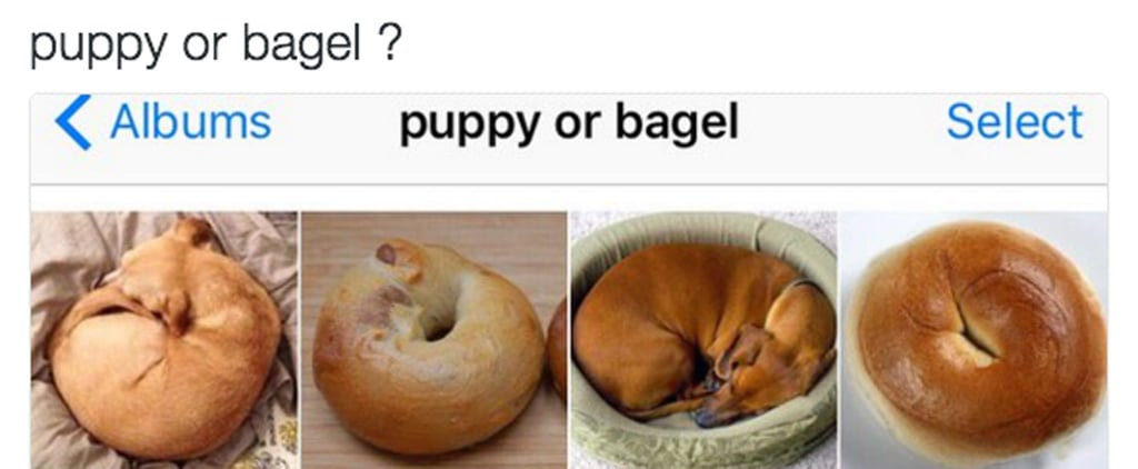 Puppy or Bagel? Shar Pei or Towel? The World May Never Know