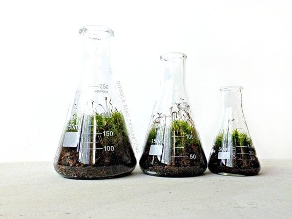 Terrarium Beakers