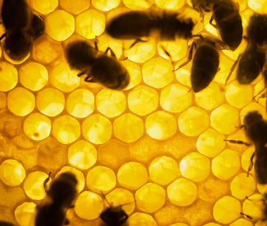 Four Beauty Uses For Honey