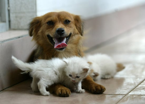 The Scoop: Mama Mutt Nurses Three Orphaned Kittens!