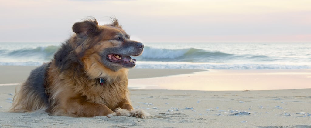 7 Tips For Taking Your Pooch on Vacation