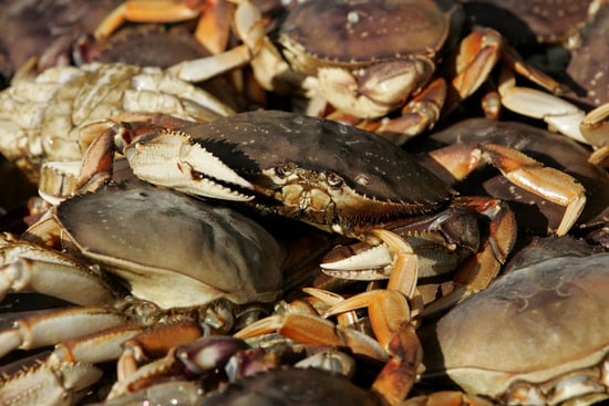 Yummy Links: From Dungeness Crab to Turkey Cookies