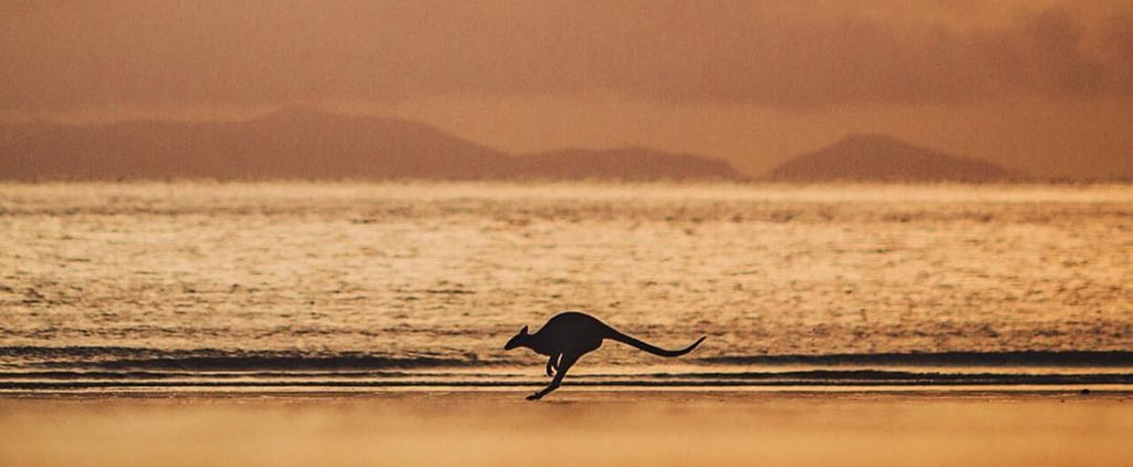 Instagram of the Day: Kangaroo at Sunrise