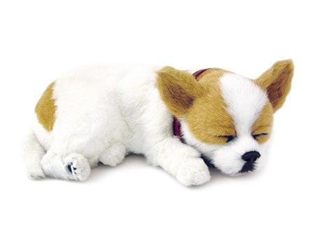 Perfect Petzzz: Chihuahua