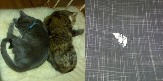 I Need Your Help . . . Can Kitty Be Obsessive and Compulsive?