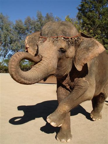Picture of Elephant From Water For Elephants Film