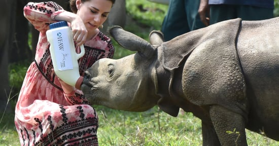 We Can't Stop Staring At Duchess Kate Feeding Baby Animals In Topshop