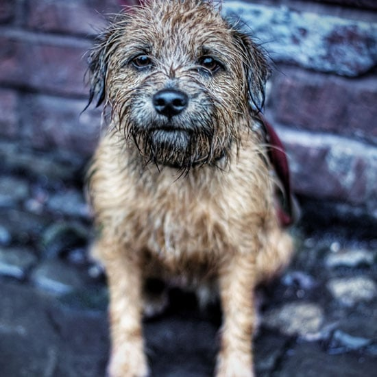 Picture of Wet Dog