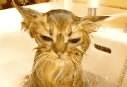 How Often Do You Bathe Your Cat?