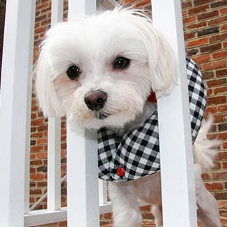 Puppy Bumper Saves Dogs on Balconies