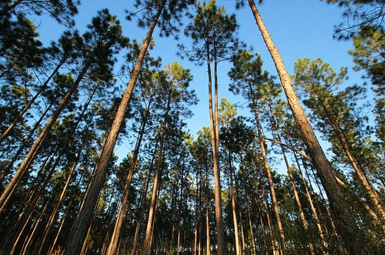 Apple Is Buying Up 36,000 Acres Of Forest To Preserve It