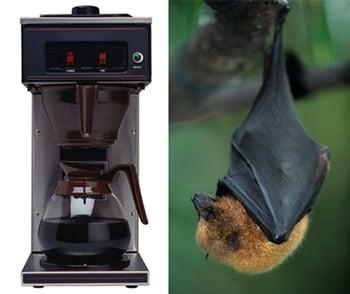 Woman's Coffee Goes Batty