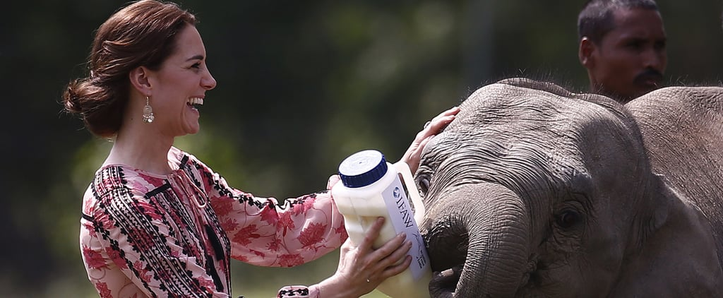 Kate Middleton Fed a Baby Elephant in a Topshop Dress — What Did You Do Today?