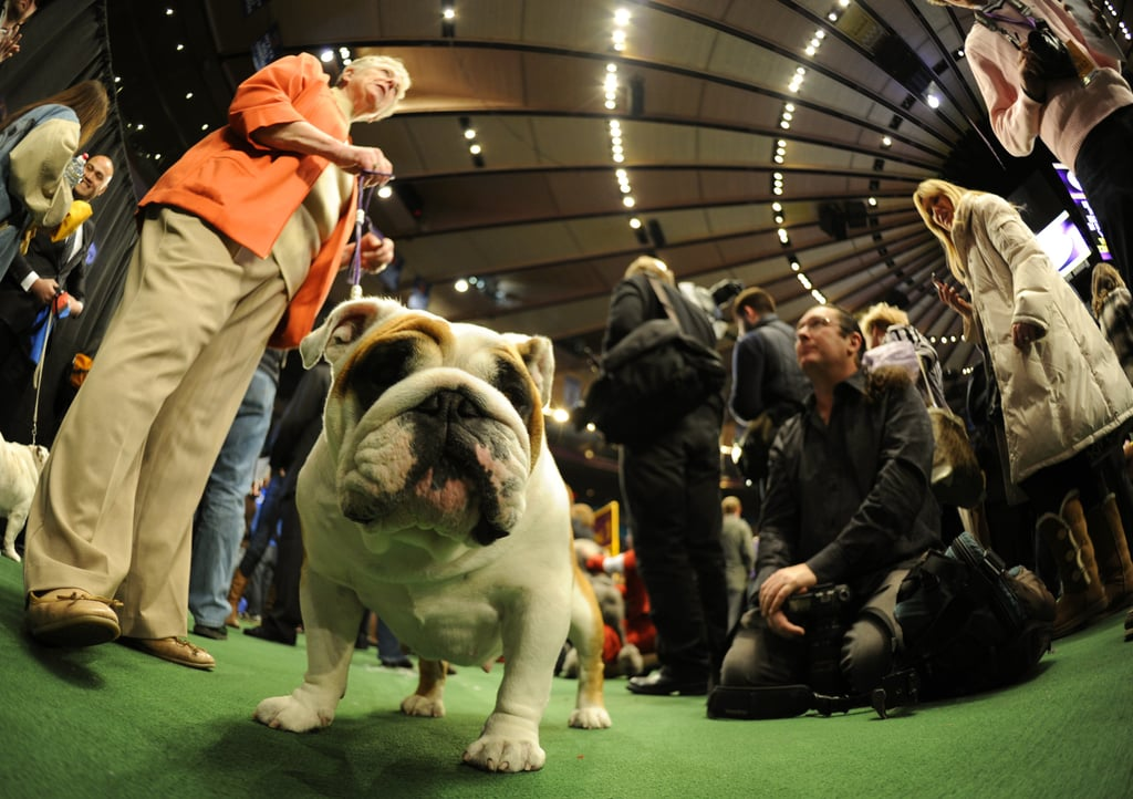Sizing up the competition in the Bulldog class.