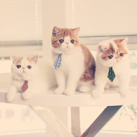 Career Lessons From Cats