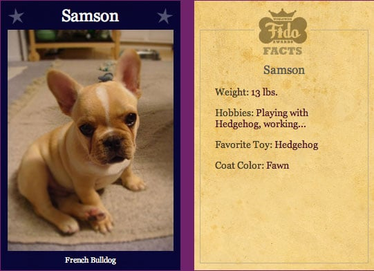 Samson Makes Worldwide Fido Semi Finals!