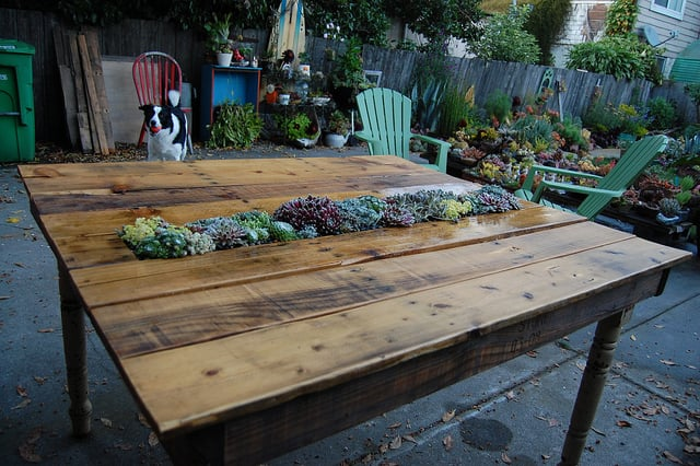 No need to arrange floral centerpieces when you have a perennial succulent garden in the middle of your table! Source: Far Out Flora