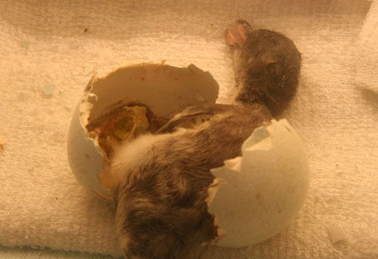 Guess What's Hatching?