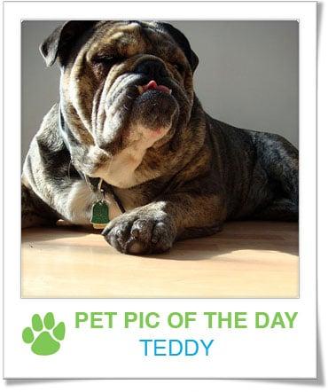 Pet Pics on PetSugar 2008-12-03 09:30:27