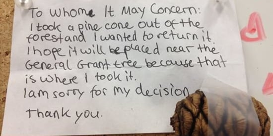 Kid Who Took A Cone From National Park Tree Fesses Up In Adorable Apology