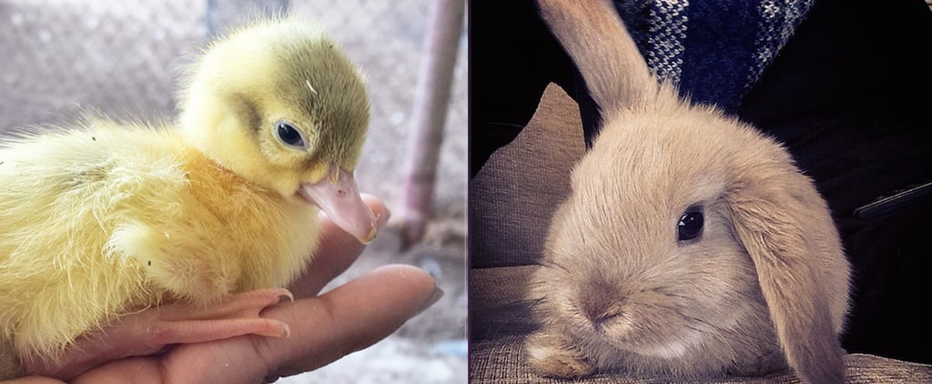 Stop Everything and Check Out These Baby Animals