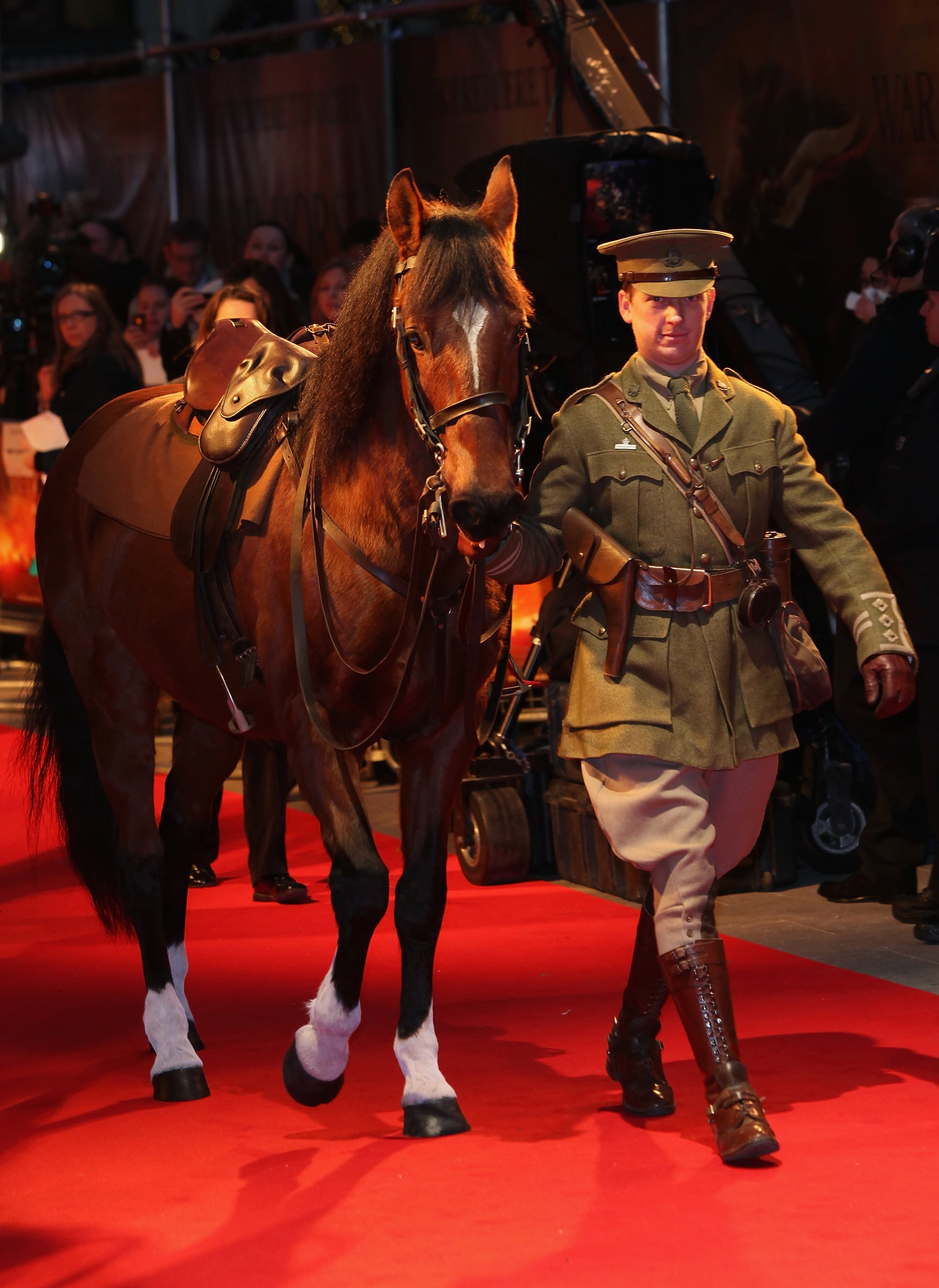 Even though the film follows the story of one horse, in reality, 14 horses played the main war horse.