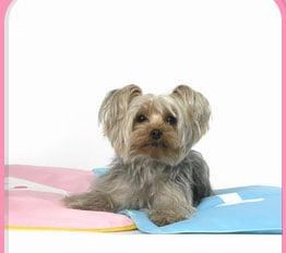 Pampered Pals: iCool Pet Mats