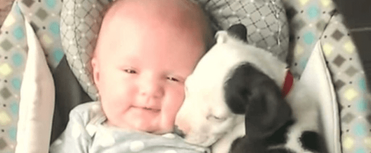 Get Ready For Your Daily Dose of Cuteness